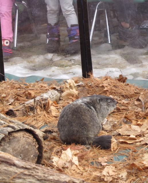 Groundhog Day 2014